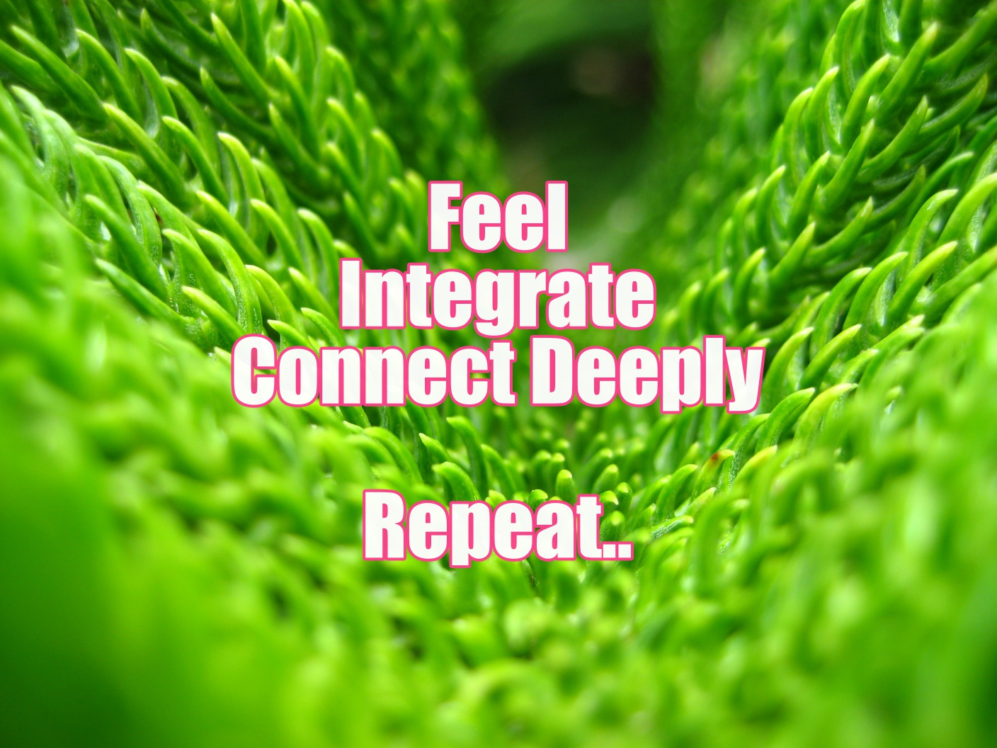 FEEL. INTEGRATE. CONNECT DEEPLY.